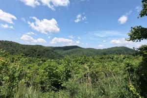 NC Mountains, 150 Acres of Mountain Forests, Fields, Views and Waterfalls (6 of 74)
