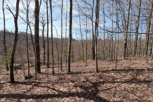 150 Acres of Mountain Forests, Fields, Views and Waterfalls in Henderson, NC (51 of 74)