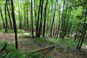 woodland fenced area, 150 Acres of Mountain Forests, Fields, Views and Waterfalls (13 of 74)