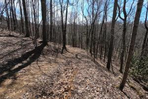 150 Acres of Mountain Forests, Fields, Views and Waterfalls in Henderson, NC (42 of 74)