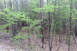 Mixed Timber Hunting Property in Attala, MS (10 of 17)