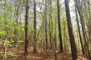 Mixed Timber Hunting Property in Attala, MS (17 of 17)