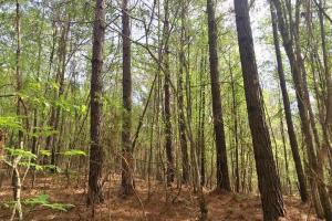 Mixed Timber Hunting Property in Attala, MS (14 of 17)