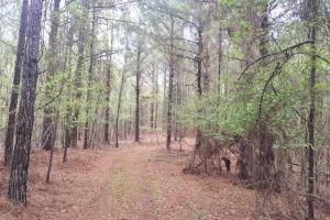 Mixed Timber Hunting Property - Attala County MS