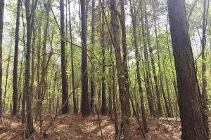 Mixed Timber Hunting Property in Attala, MS (4 of 17)