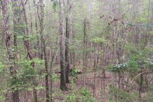 Mixed Timber Hunting Property in Attala, MS (11 of 17)