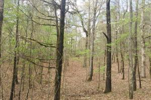 Mixed Timber Hunting Property in Attala, MS (7 of 17)