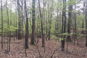 Mixed Timber Hunting Property in Attala, MS (12 of 17)