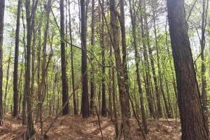Mixed Timber Hunting Property in Attala, MS (16 of 17)