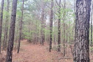 Mixed Timber Hunting Property in Attala, MS (3 of 17)