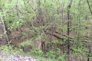 Mixed Timber Hunting Property in Attala, MS (9 of 17)