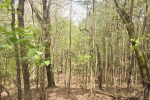 Mixed Timber Hunting Property in Attala, MS (6 of 17)