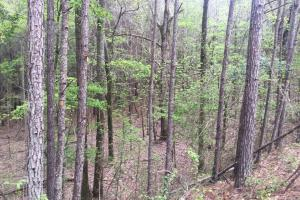 Mixed Timber Hunting Property in Attala, MS (8 of 17)