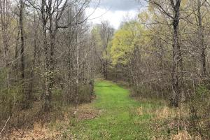 Westpoint Hunting and Timber Investment in Lawrence, TN (15 of 22)