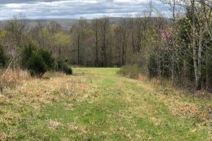 Westpoint Hunting and Timber Investment in Lawrence, TN (19 of 22)