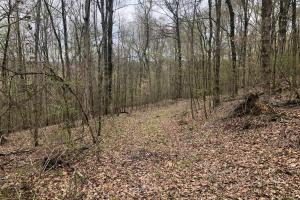 Westpoint Hunting and Timber Investment in Lawrence, TN (6 of 22)