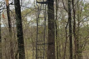 Westpoint Hunting and Timber Investment in Lawrence, TN (5 of 22)