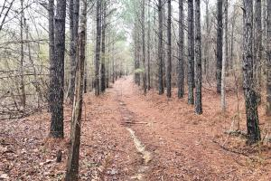 CR 11 Red Bay Hunting and Timber Investment - Franklin County AL