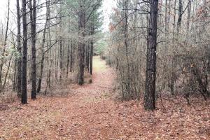 CR 11 Red Bay Hunting and Timber Investment in Franklin, AL (9 of 15)