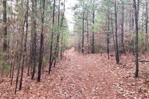 CR 11 Red Bay Hunting and Timber Investment in Franklin, AL (10 of 15)