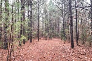 CR 11 Red Bay Hunting and Timber Investment in Franklin, AL (12 of 15)