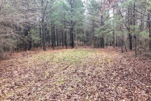 CR 11 Red Bay Hunting and Timber Investment in Franklin, AL (13 of 15)