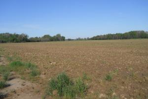 General view of ag acreage 3 (6 of 8)