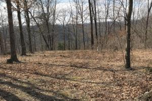 Hunting Land & Timber Investment in Rowan County, KY (2 of 14)