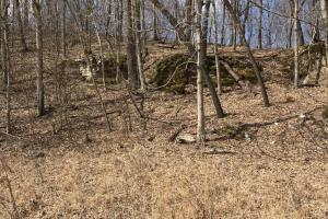 Hunting Land & Timber Investment in Rowan County, KY (9 of 14)