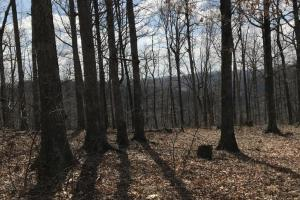 Hunting Land & Timber Investment in Rowan County, KY (7 of 14)
