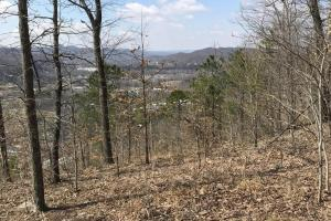 Hunting Land & Timber Investment in Rowan County, KY (12 of 14)