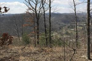 Hunting Land & Timber Investment in Rowan County, KY (13 of 14)