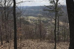 Hunting Land & Timber Investment in Rowan County, KY (14 of 14)