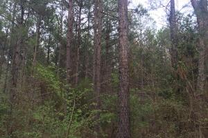 Duck Hill Timber Investment - Montgomery County MS