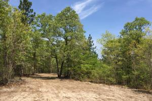 Springvale Recreational Tract with Homesite and Pond in Kershaw, SC (11 of 29)