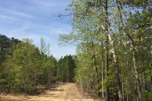 Springvale Recreational Tract with Homesite and Pond in Kershaw, SC (21 of 29)