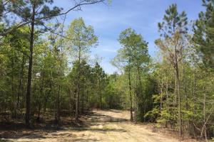 Springvale Recreational Tract with Homesite and Pond in Kershaw, SC (23 of 29)
