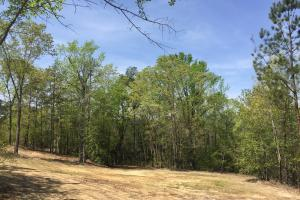 Springvale Recreational Tract with Homesite and Pond in Kershaw, SC (24 of 29)