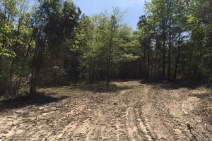 Springvale Recreational Tract with Homesite and Pond in Kershaw, SC (14 of 29)