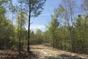 Springvale Recreational Tract with Homesite and Pond in Kershaw, SC (18 of 29)