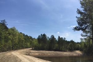 Springvale Recreational Tract with Homesite and Pond in Kershaw, SC (4 of 29)