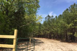 Springvale Recreational Tract with Homesite and Pond in Kershaw, SC (25 of 29)