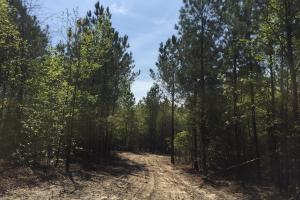 Springvale Recreational Tract with Homesite and Pond in Kershaw, SC (17 of 29)