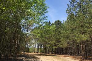 Springvale Recreational Tract with Homesite and Pond in Kershaw, SC (26 of 29)