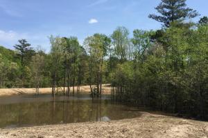 Springvale Recreational Tract with Homesite and Pond in Kershaw, SC (8 of 29)