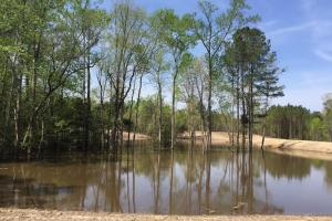 Springvale Recreational Tract with Homesite and Pond in Kershaw, SC (5 of 29)
