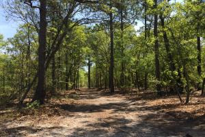 Springvale Recreational Tract with Homesite and Pond in Kershaw, SC (13 of 29)