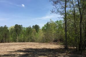 Springvale Recreational Tract with Homesite and Pond in Kershaw, SC (20 of 29)