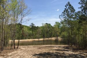 Springvale Recreational Tract with Homesite and Pond in Kershaw, SC (9 of 29)