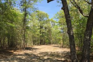 Springvale Recreational Tract with Homesite and Pond in Kershaw, SC (15 of 29)